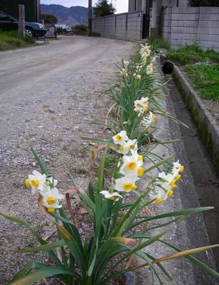 http://awaji-kenji-hiroko.com/swfu/d/129_R.JPG
