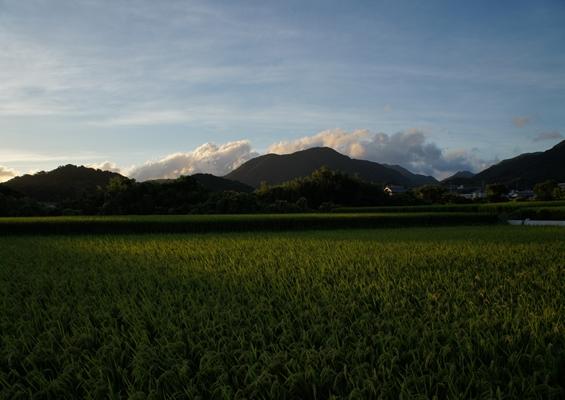 http://awaji-kenji-hiroko.com/swfu/d/DSC00291_R.JPG
