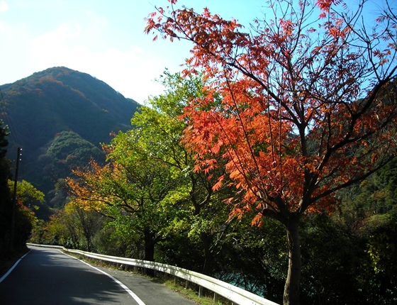 http://awaji-kenji-hiroko.com/swfu/d/DSCN4697_R.JPG
