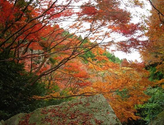 http://awaji-kenji-hiroko.com/swfu/d/DSCN4853_R.JPG
