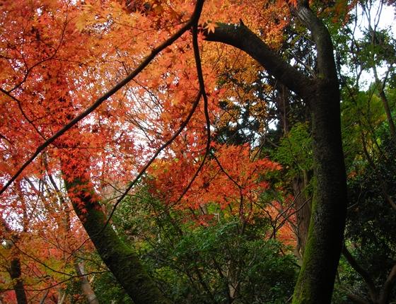 http://awaji-kenji-hiroko.com/swfu/d/DSCN4866_R.JPG