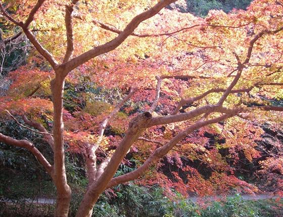 http://awaji-kenji-hiroko.com/swfu/d/DSCN4955_R.JPG