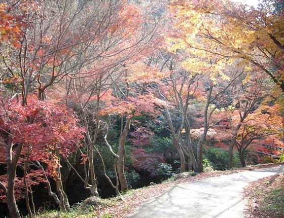 http://awaji-kenji-hiroko.com/swfu/d/DSCN4956_R.JPG
