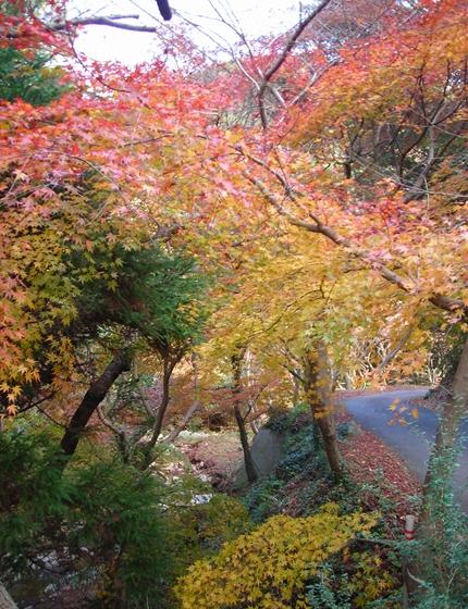 http://awaji-kenji-hiroko.com/swfu/d/DSCN4963_R.JPG
