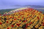 花さじき・海峡公園