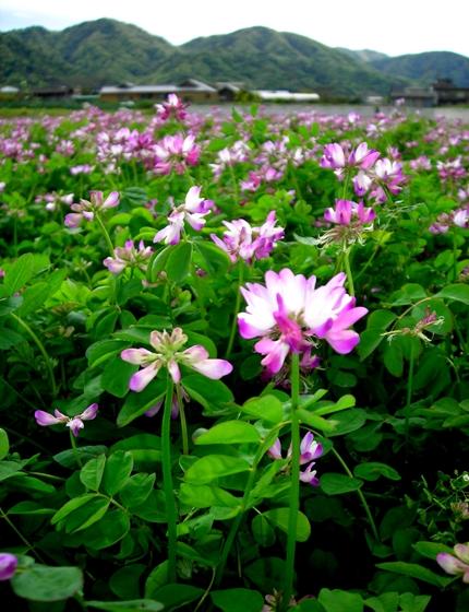 http://awaji-kenji-hiroko.com/swfu/d/s_s_s_s_052_R.JPG