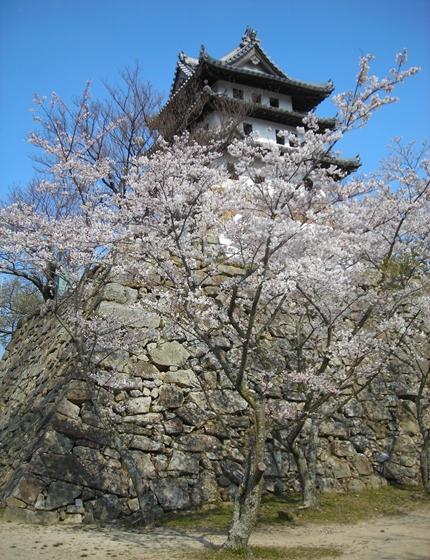 http://awaji-kenji-hiroko.com/swfu/d/s_s_s_s_s_s_036_R.JPG