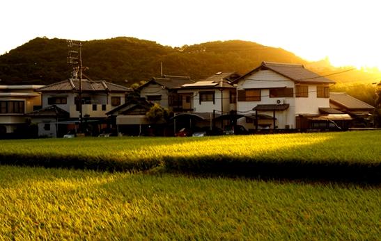http://awaji-kenji-hiroko.com/swfu/d/s_s_s_s_s_s_070_R.JPG
