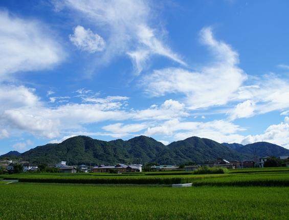 http://awaji-kenji-hiroko.com/swfu/d/s_s_s_s_s_s_100_R.JPG