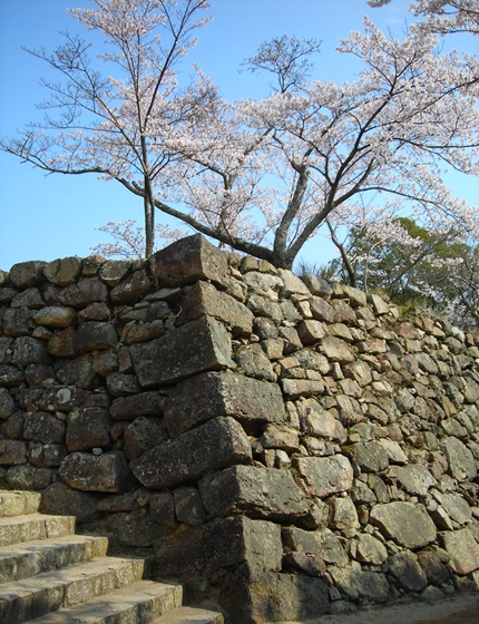 http://awaji-kenji-hiroko.com/swfu/d/s_s_s_s_s_s_s_037_R.JPG
