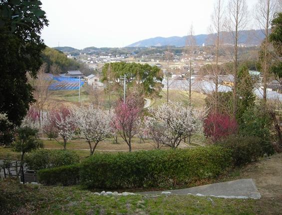 http://awaji-kenji-hiroko.com/swfu/d/s_s_s_s_s_s_s_s_s_025_R.JPG