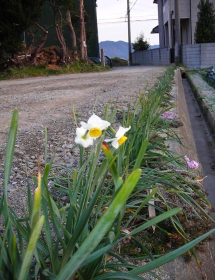 http://awaji-kenji-hiroko.com/swfu/d/s_s_s_s_s_s_s_s_s_s_s_003_R.JPG