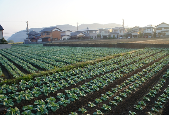 http://awaji-kenji-hiroko.com/swfu/d/s_s_s_s_s_s_s_s_s_s_s_045_R.JPG