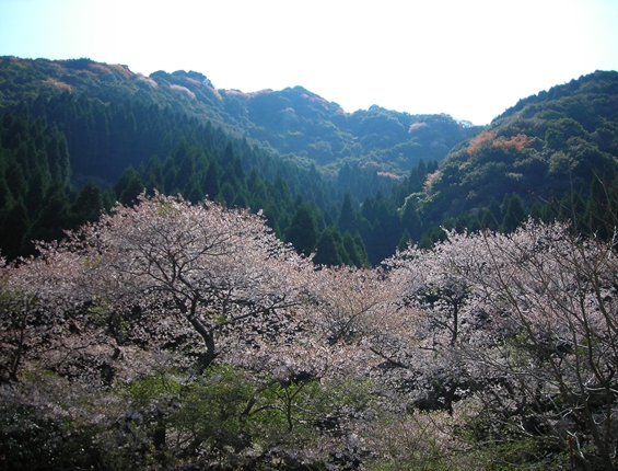 http://awaji-kenji-hiroko.com/swfu/d/s_s_s_s_s_s_s_s_s_s_s_s_s_026_R.JPG