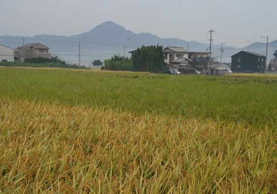 http://awaji-kenji-hiroko.com/swfu/d/s_s_s_s_s_s_s_s_s_s_s_s_s_042_R.JPG