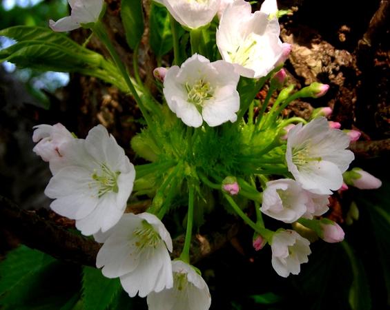 http://awaji-kenji-hiroko.com/swfu/d/s_s_s_s_s_s_s_s_s_s_s_s_s_s_033_R.JPG