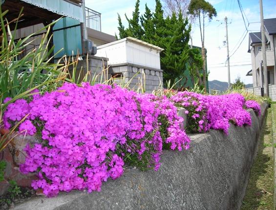 http://awaji-kenji-hiroko.com/swfu/d/s_s_s_s_s_s_s_s_s_s_s_s_s_s_s_s_s_013_R.JPG