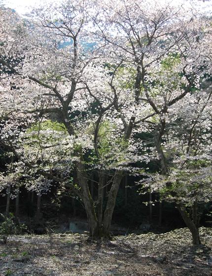 http://awaji-kenji-hiroko.com/swfu/d/s_s_s_s_s_s_s_s_s_s_s_s_s_s_s_s_s_029_R.JPG