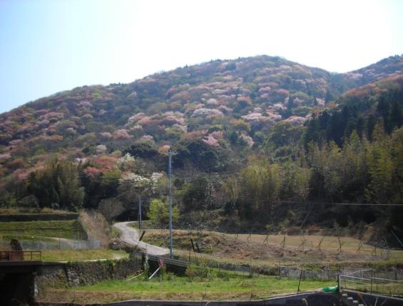 http://awaji-kenji-hiroko.com/swfu/d/s_s_s_s_s_s_s_s_s_s_s_s_s_s_s_s_s_s_s_s_s_s_s_004_R.JPG