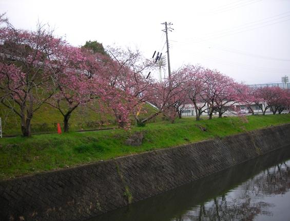 http://awaji-kenji-hiroko.com/swfu/d/s_s_s_s_s_s_s_s_s_s_s_s_s_s_s_s_s_s_s_s_s_s_s_s_s_002_R.JPG