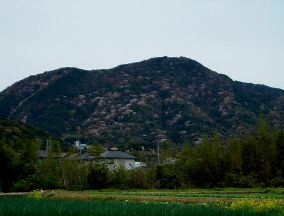 http://awaji-kenji-hiroko.com/swfu/d/s_s_s_s_s_s_s_s_s_s_s_s_s_s_s_s_s_s_s_s_s_s_s_s_s_s_s_s_s_s_s_s_s_s_s_s_s_001_R.JPG